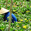 In this photo: 1) Vietnamese woman 2) Traditional conical hat 3) Flowers