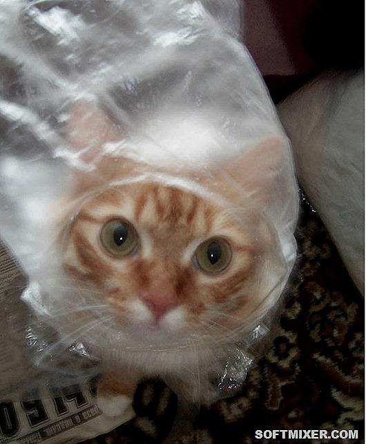 Рыжий-кот-в-прозрачном-целофановом-пакете