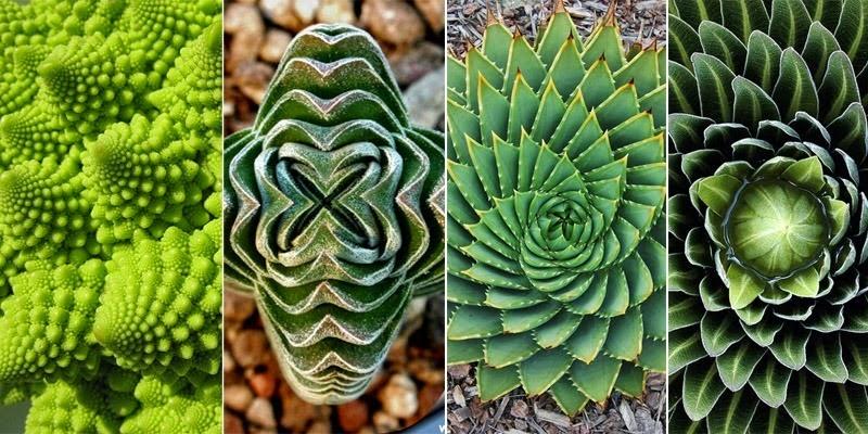 geometry-plants