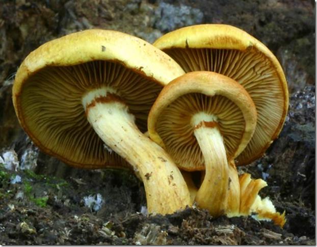 ciri fungi