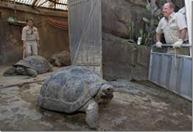speed_tortoise_zoo