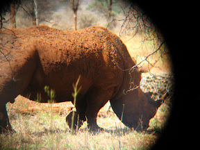 """We called this a """"red rhino"""". There's no such thing, but apparently this guy was rolling around in some red mud."""