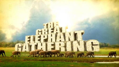 Wielkie zgromadzenie s�oni  / The Great Elephant Gathering (2011) PL.1080i.HDTV.x264 / Lektor PL