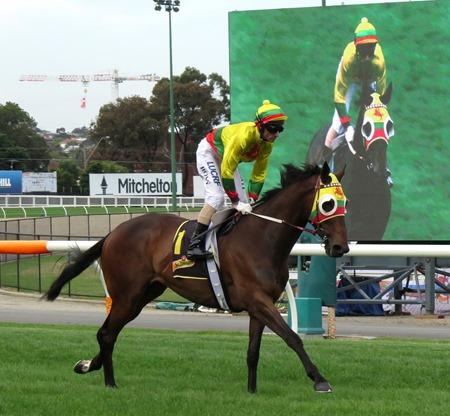 race 8_lucky hussler 2