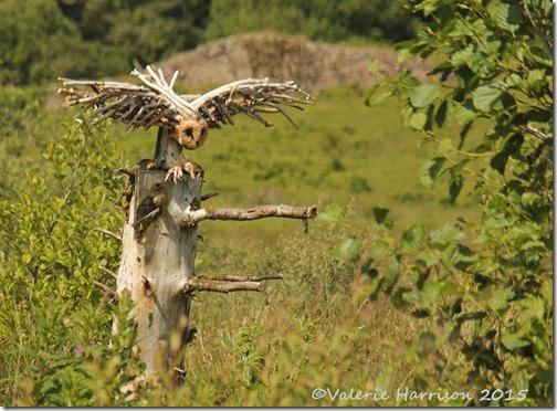 28-Ecoarts-owl