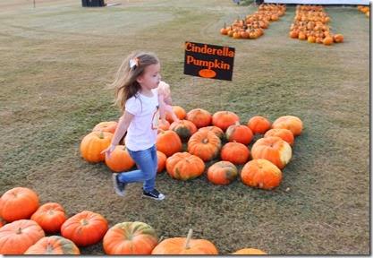 Zoey running through the pumpkins6