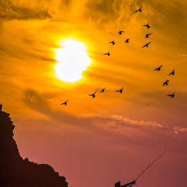 Catch me if you can by Assi Dvilanski - Landscapes Sunsets & Sunrises ( colors, sunset, sea, beach, landscape, fisherman, birds, sun )