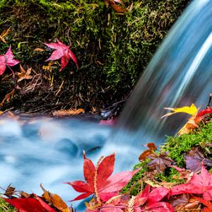 Small Water Fall 19 11 17_.jpg