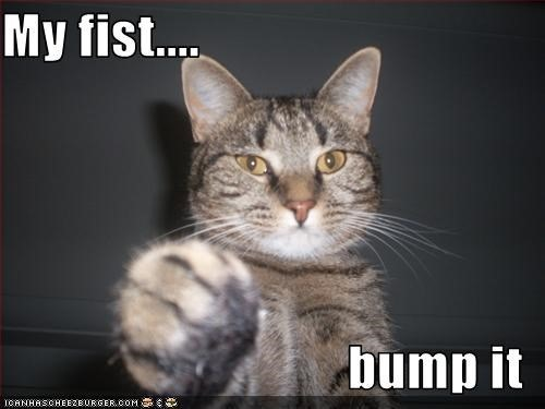 fist bump cat
