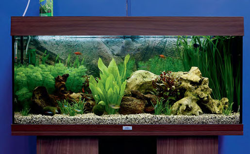 Image of tropical freshwater tank