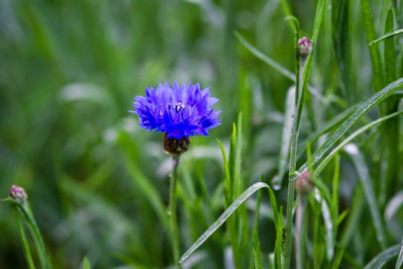 macro flowers-7482