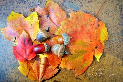 acorns leaves