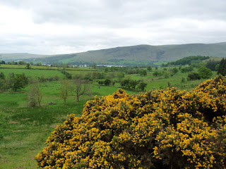 The Gorse is in flower today.