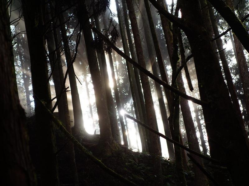 2013_1126-1129 鹿林山-1_240
