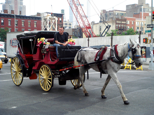 carriage in New York City, New York, United States