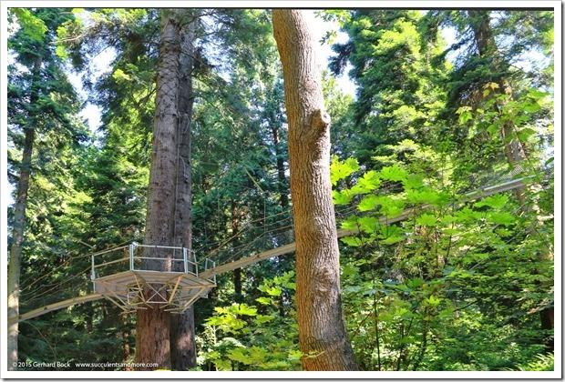 150629_Vancouver_UBCBG_0069