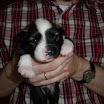 Archie 25-12-08.JPG