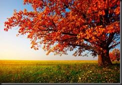 Autumn in Wellman, Iowa