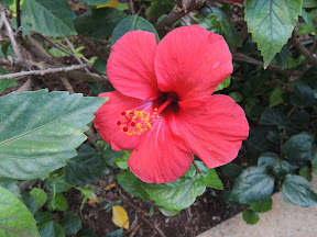 Botanical Gardens - Santa Cruz de Tenerife