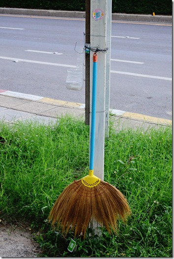 Asian broom