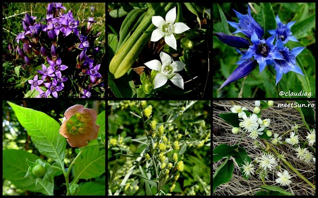 flori-piatra-mare-august-rw.jpg