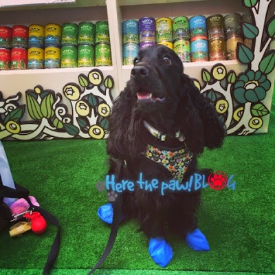 Pawz scarpe per cani