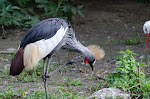 Zoo de Beauval