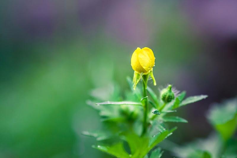 macro flowers-7485