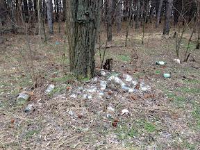лес16.jpg
