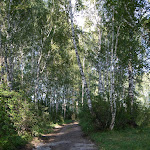 Im Birkenwald / В берёзовом лесу