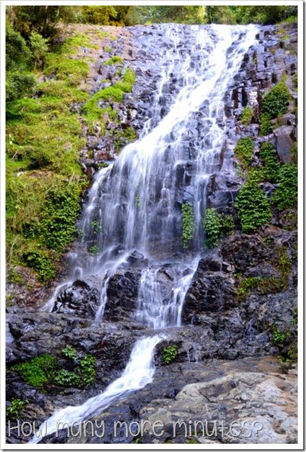 Dorrigo National Park | How Many More Minutes?