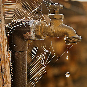 Drip by Mary Bray - Artistic Objects Other Objects ( water drops, spider webs, sepia tones, outdoor faucet, water drips, rustic, spider web )