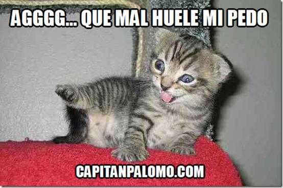 pedo gatos3