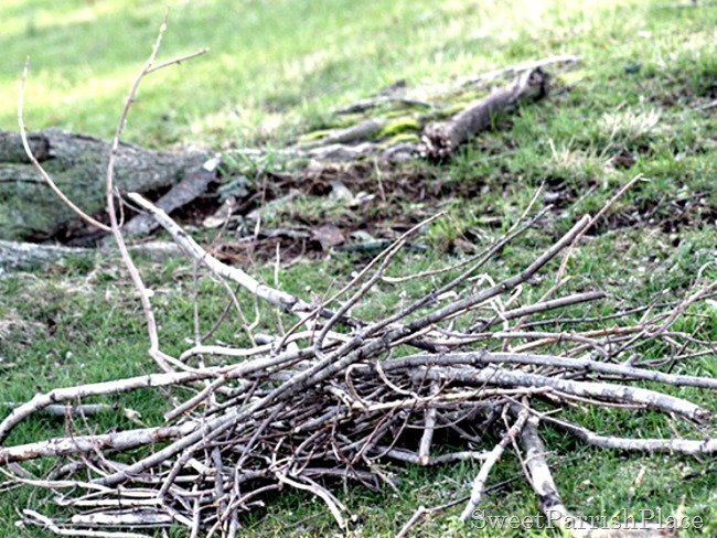 pile-of-branches