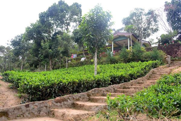 Чайные плантации, Элла, Шри Ланка