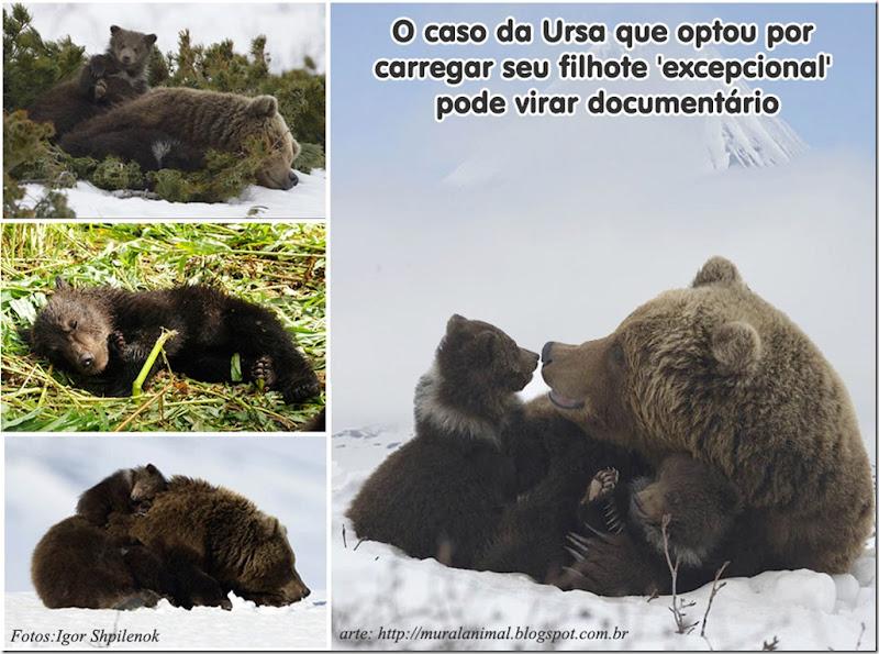 ursa-filhote-excepcional