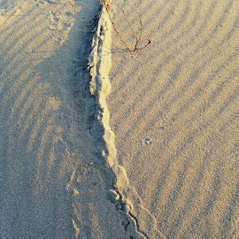 Sandy Scape by Candace Penney - Landscapes Beaches ( sand, pattern, sandy, beach, design )