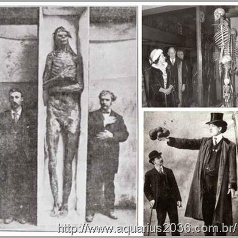 Smithsonian admite a destruição de milhares de Esqueletos Gigantes no início de 1900