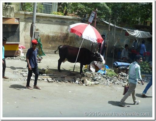 YangontoSafaga2015 297