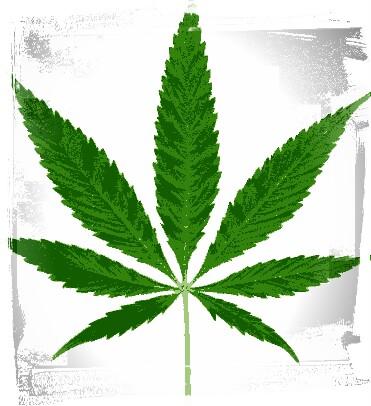 Info Efek Negatife Pemakaian Narkoba Jenis Ganja