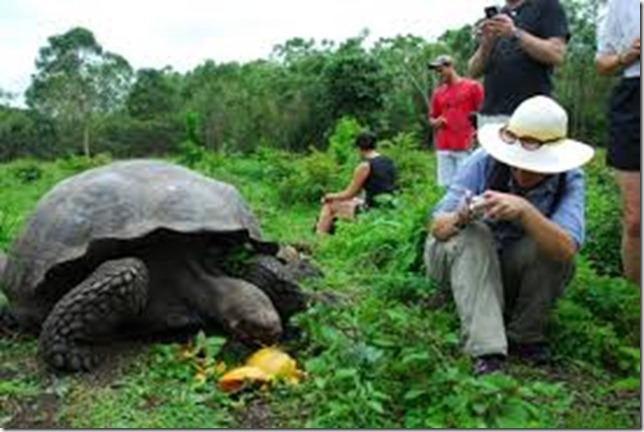diego_tortoise