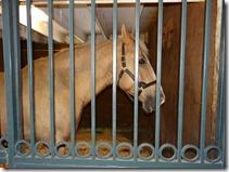 KY horse park 059