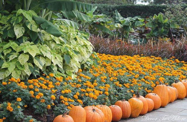 Pumpkins Arboretum 051
