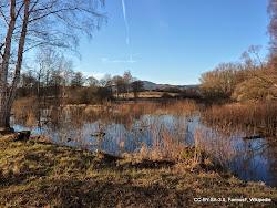 Na celém území Doupovských hor se nachází mnoho chráněných území. Jedním z nich je např. přírodní rezervace Ostrovské rybníky, kterou tvoří soustava osmi rybníků. Rezervace je významná převážně pro ptactvo, které zde hnízdí a slouží jako zastávka pro stěhovavé druhy, např. volavku bílou nebo orla mořského. Velký význam má zdejší populace kriticky ohroženého čolka velkého. Rezervace se nachází asi 1 km západně od Ostrova.
