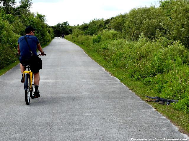bicicleta-everglades-cocodrilo.JPG