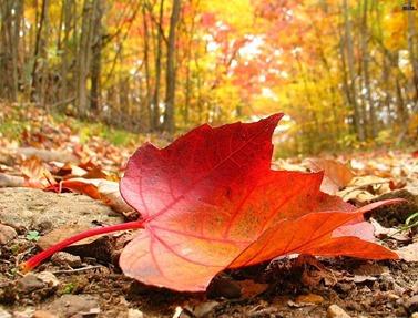 hoja-de-otoño-1024x768