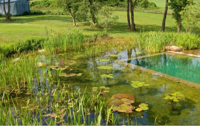 Lillie house designing a permaculture pond part 2 for Types of pond design