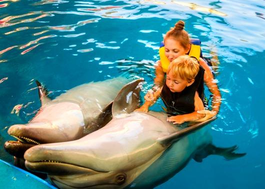 delfini-terapija-medicina-45833893