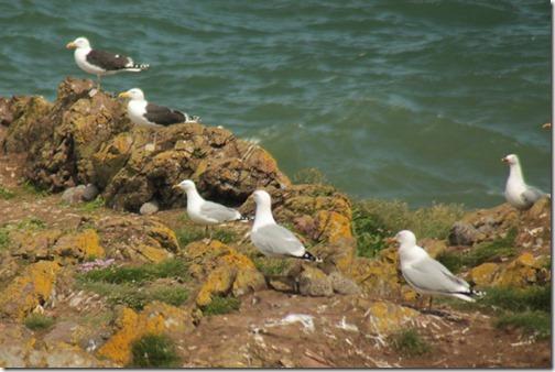 30-baby-gulls