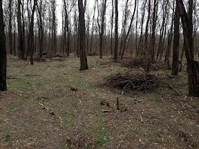 лес21.jpg
